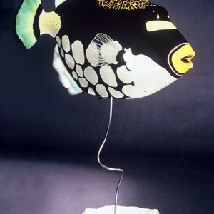 Clown Trigger Fish Sculpture [approx. 16in]