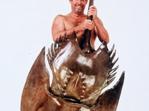 7006_Horseshoe_crab_sculpture_tiny_man