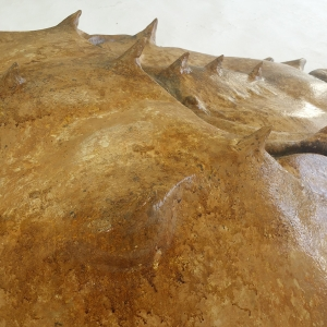 Horse-shoe-crab-01-Feb28