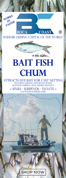 Bait fish chum to catch pilchards
