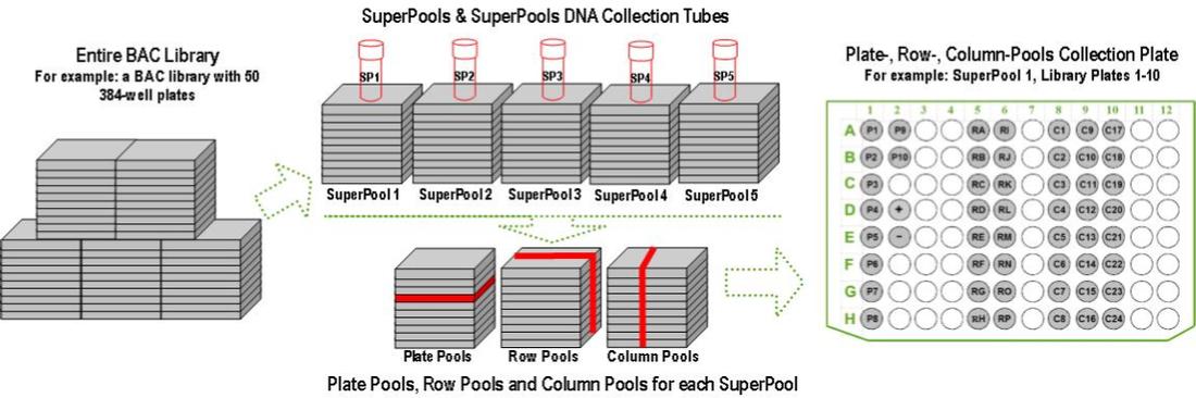 DNA Pooling