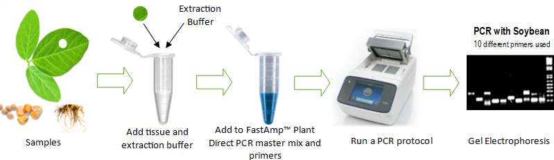 fastamp plant direct pcr