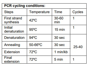 One Step RTqPCR PCR Cycling Conditions