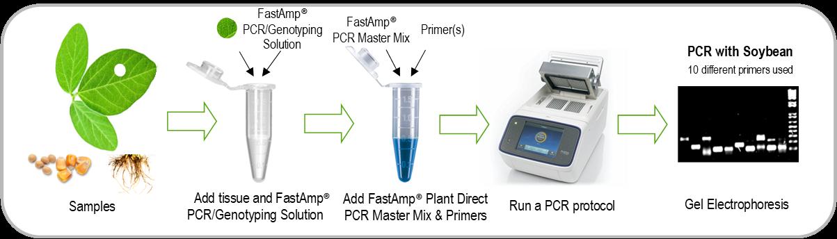 Plant Direct PCR