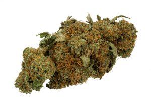 marijuana cannabis weed pot