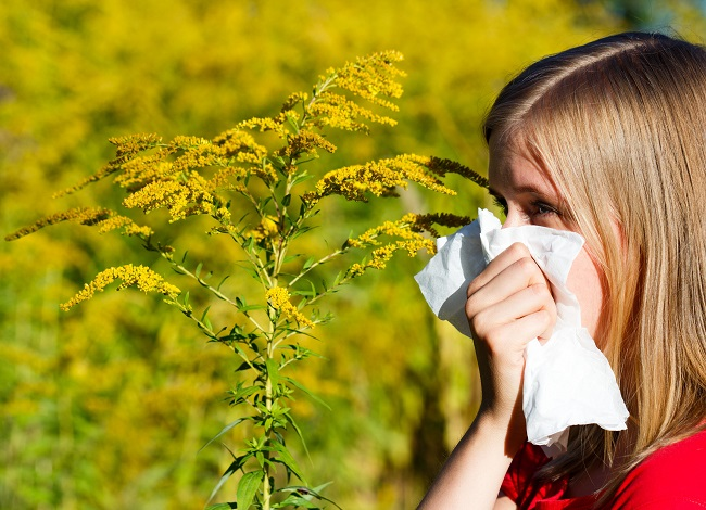Ragweed Allergy: Understanding the Symptoms and How to Manage Them