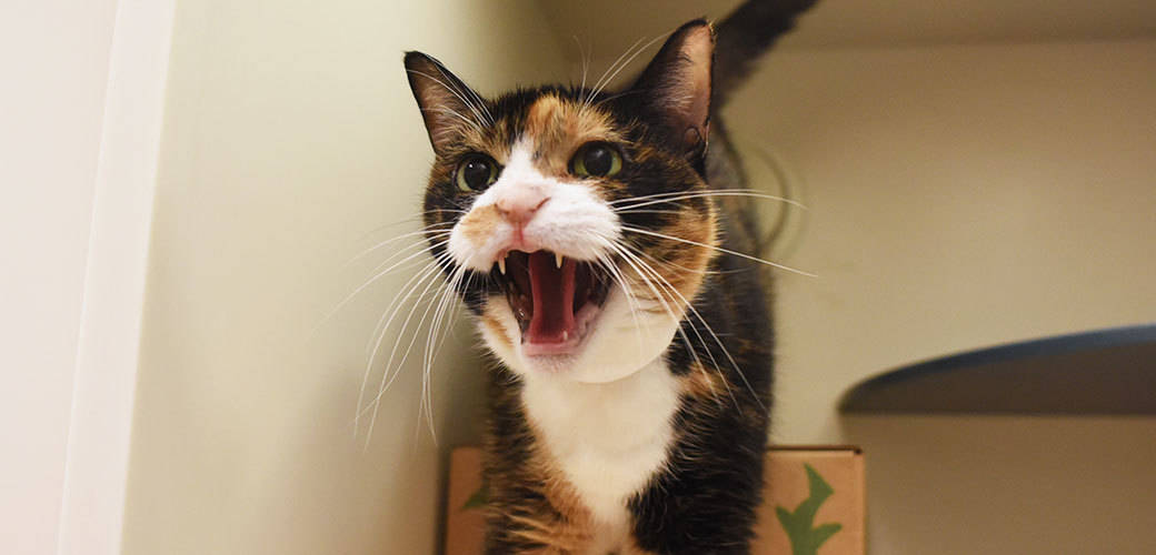 cat-care_aggression-in-cats_main-image