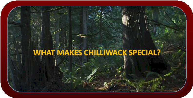 Find out why you should move to Chilliwack.