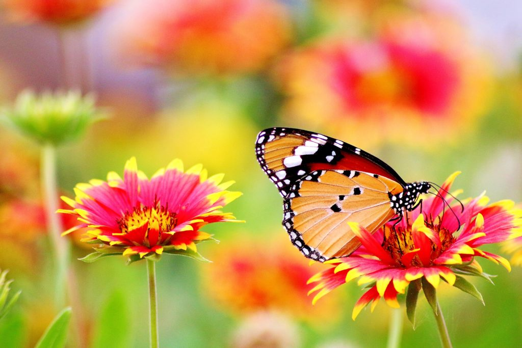 Photograph of a butterfly sitting on a flower