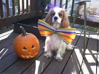 Dog's first Halloween