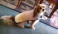Dog drying jacket and coats