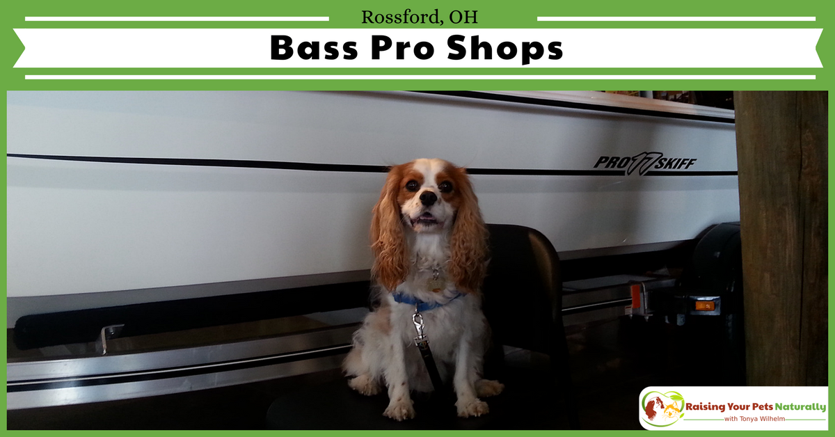 Dog-Friendly Ohio Stores and Activities, Rossford, Ohio If you are looking for an Ohio dog-friendly day trip, check out Bass Pro in Rossford, Ohio. #raisingyourpetsnaturally