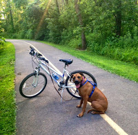 Biking with Dogs