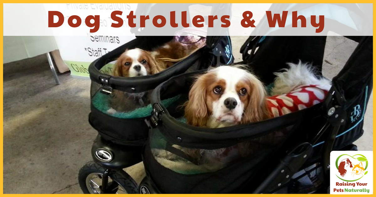 Dog Strollers and Why. Shouldn't a dog be walking and getting exercise? There are numerous reasons for a using a pet stroller. Read before you judge. #raisingyourpetsnaturally