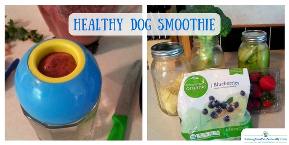 Healthy Dog Treat Recipes   Low Calorie Dog Smoothie Treat. Mom is always trying to find me healthy food and dog treats to eat. We also like to take our adventures to the local ice cream shops. She's been feeling guilty for allowing me to eat the dairy and non-organic ice cream when we're there. So, she came up with this little snack! Grandma's morning smoothies were her inspiration.