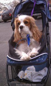 Dog strollers, pet strollers, Cat Stroller