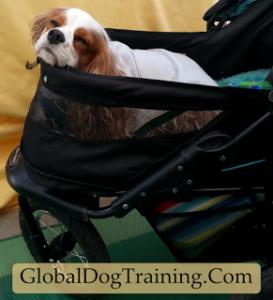 Best Dog Stroller Reviews