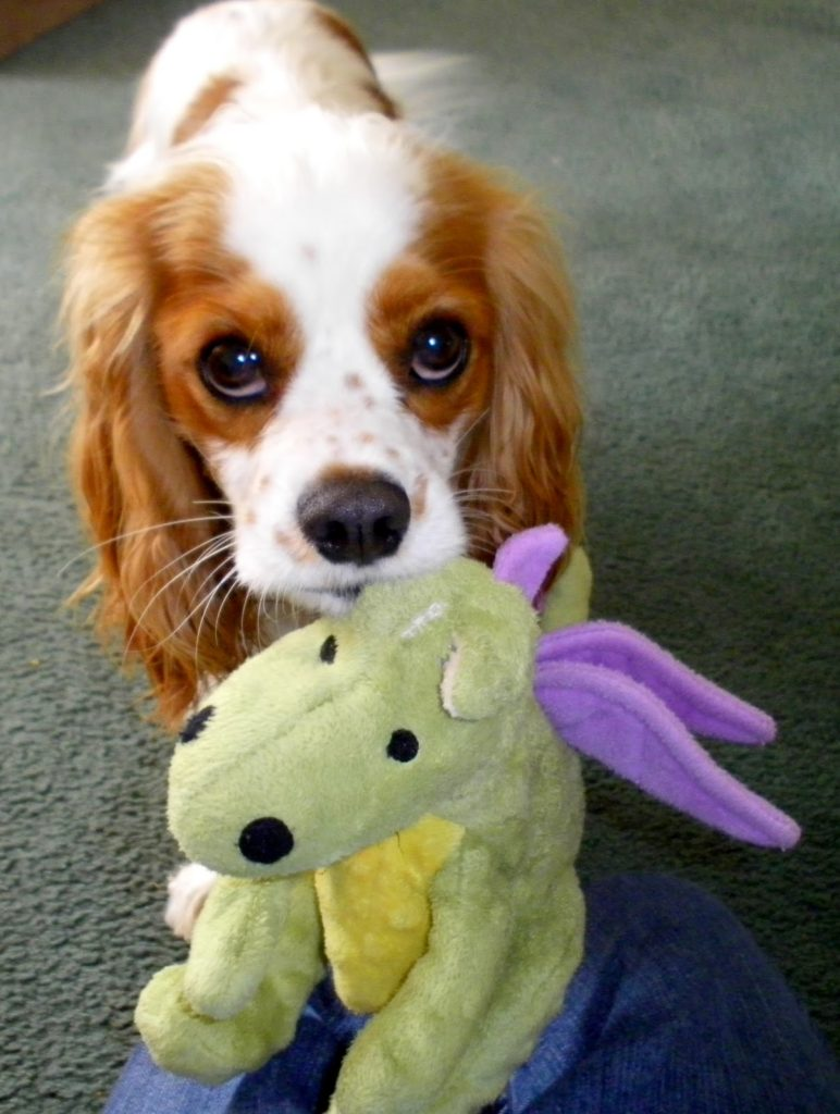Tough Dog Toy Reviews