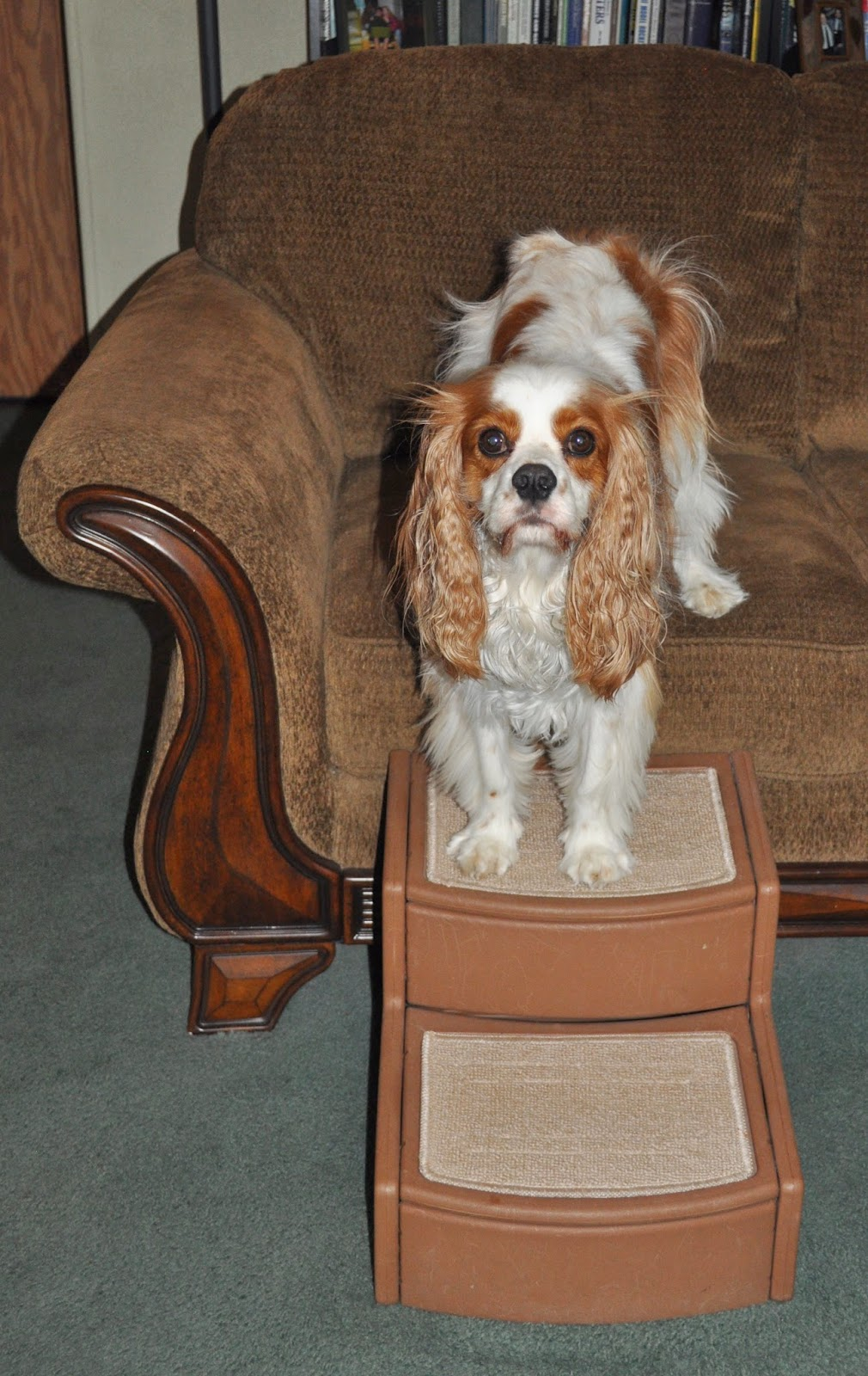 """The Pet Gear Easy Step II Pet Stairs measure 14"""" wide x 14"""" and were easily put together with a few snaps. They are extremely lightweight and easy to move from room to room. They are the perfect height for me and getting on the sofa. Even my brother Nutter The Cat uses them! Mom's big bed is very high up, so these would be too short for that."""