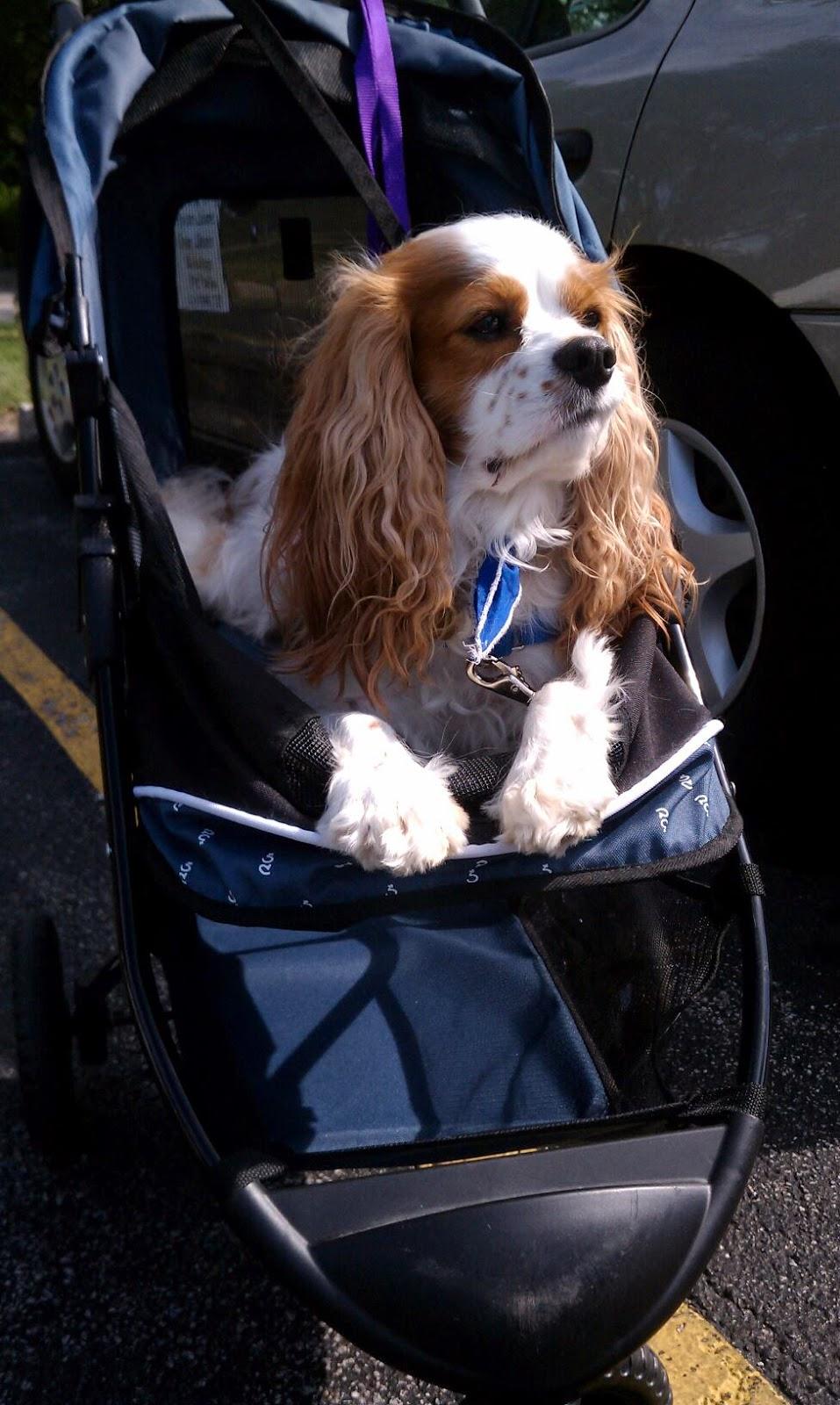 Dog Stroller Reviews