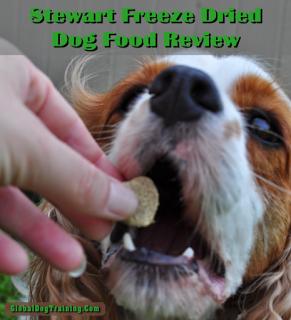 Raw, Healthy Dog Food
