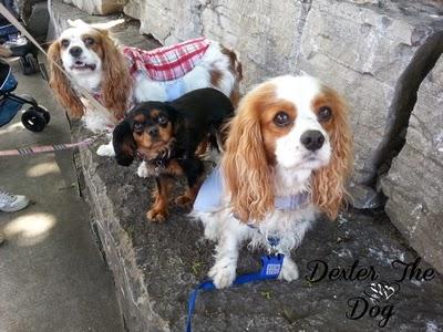 Dog-friendly destinations