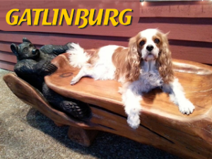 dog friendly gatlinburg, Tennessee