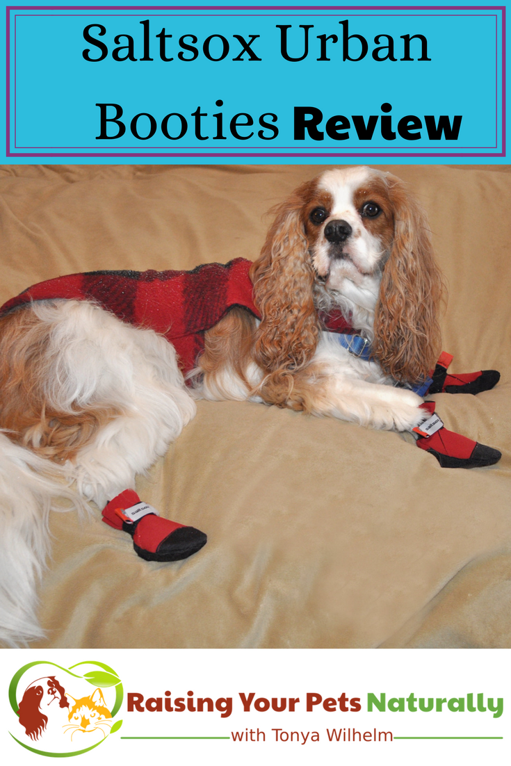Dog Shoes and Dog Boots for Snow. Saltsox Urban Booties Dog Boots that Stay On! #raisingyourpetsnaturally #sponsored #dogboots #dogshoes