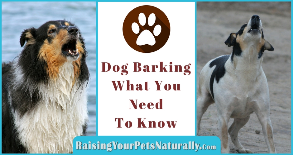 Learn how to stop your dog from barking. But first, learn why dogs bark and what you need to know before training.