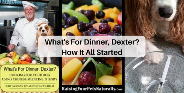 What's For Dinner, Dexter? The Back Story Learning how to home cook a healthy and balanced meal for your dog.