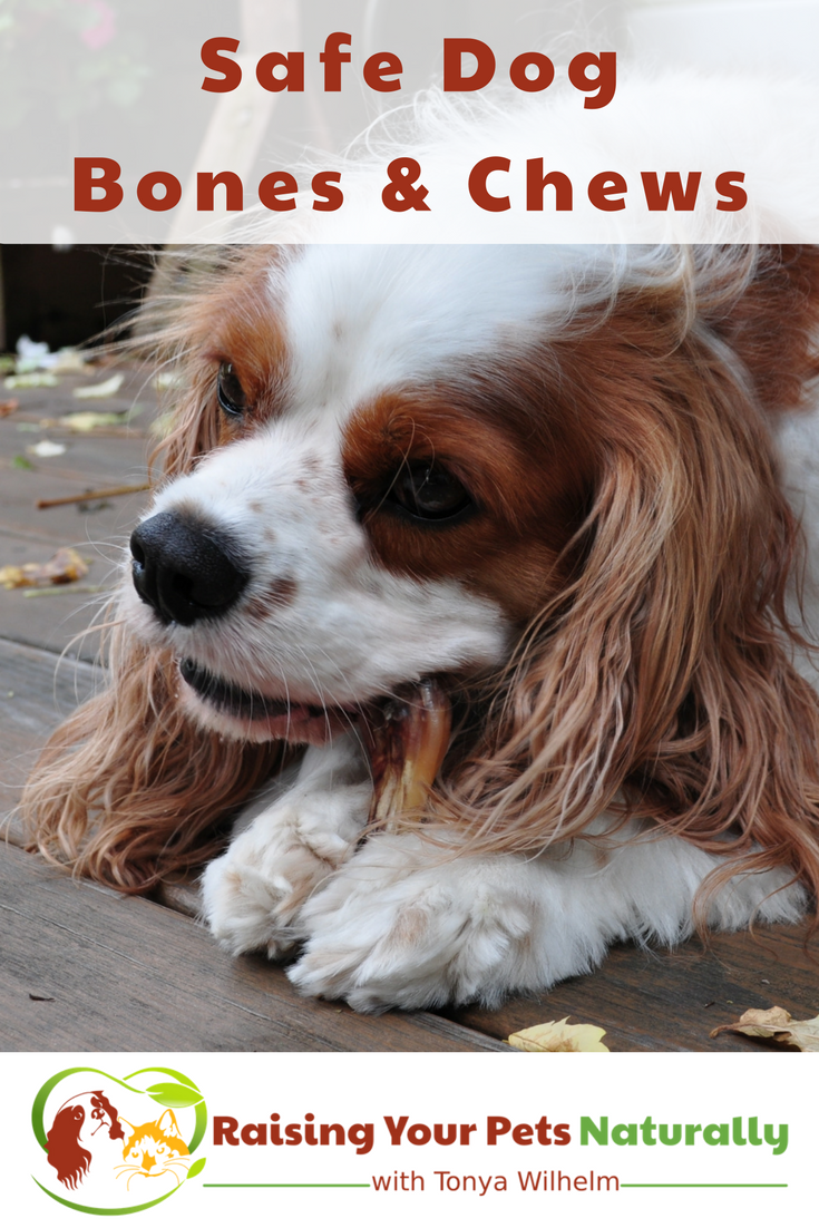 What you need to know about dog bones. Learn how to spot safe and healthy dog chews and bones. #raisingyourpetsnaturally #dogbones #dogchews #healthydogs