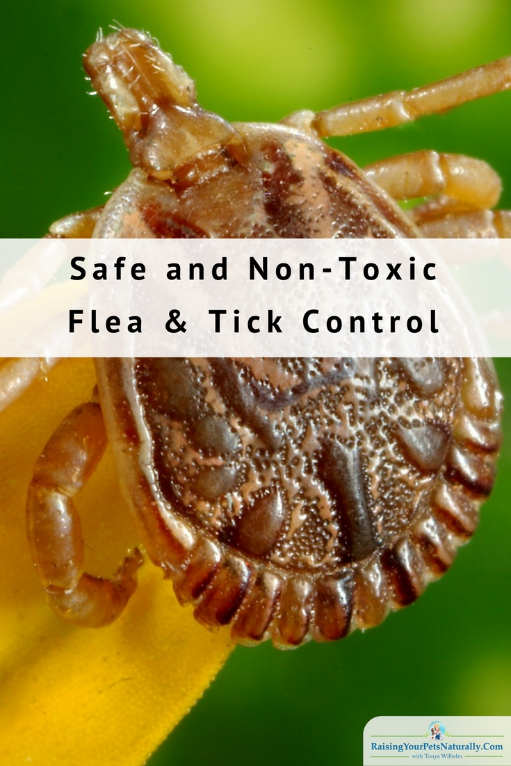 Best Natural Flea and Tick Treatment for Dogs. No need for harsh and potentially fatal flea products, here are some natural solutions. #raisingyourpetsnaturally #naturaltickspray #naturalfleaspray #diytick #diyflea