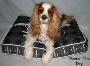 PLAY Dog Bed Reviews