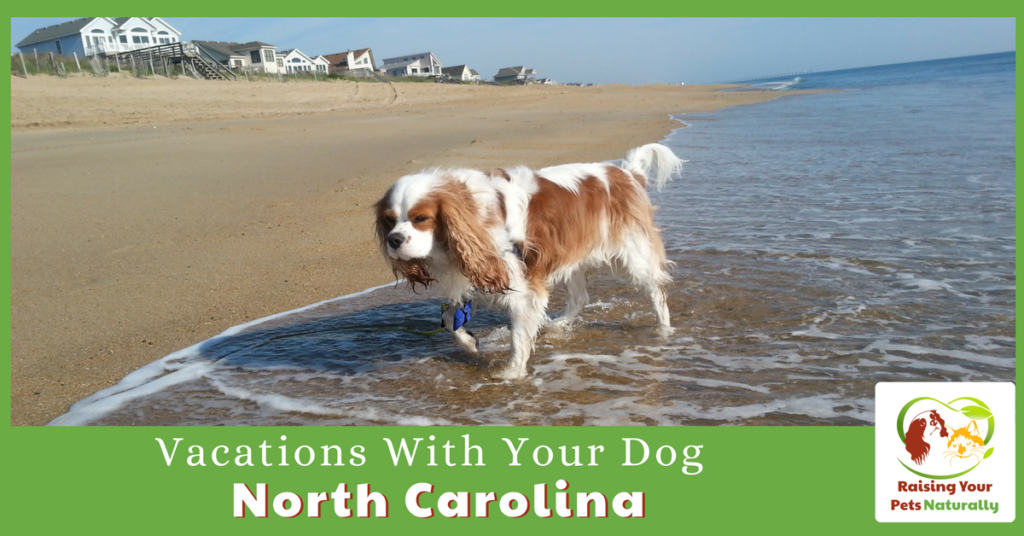 Dog-Friendly Vacations in North Carolina. If you are traveling with dogs, you won't want to miss these Dog-Friendly North Carolina attractions, hotels and destinations. #raisingyourpetsnaturally