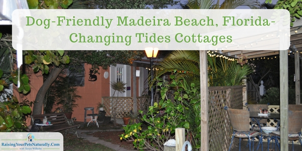 Dog-Friendly Madeira Beach, Florida-Changing Tides Cottages Review. We arrived at our destination, Changing Tides Cottages at Madeira Beach. We were welcomed by the friendly maintenance man, Mark, and his yellow lab Eli. Changing Tides is more than a dog-friendly cottage rental company, they cater to dogs and their families. This is definitely a retreat that Dexter and I can get behind.