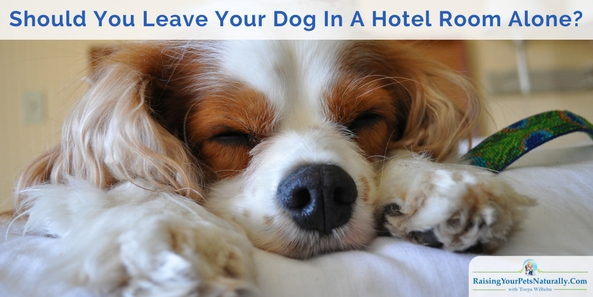 Dog-Friendly Vacations and Traveling with Dogs Travel Safety Tips Hotel Safety when Traveling with Dogs