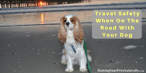 Traveling with Dogs | Travel Safety When On The Road With Your Dog. When you and your dog are hitting the road for your dog-friendly vacation, the actual road trip can be the best part! Sometimes people are so focused on the destination, they forget to stop and smell the flowers, a part that a traveling dog really should be doing frequently. Here are my top 5 tips to make your journey to your vacation with your dog a fun one.