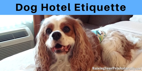 Traveling with dogs can be a blast. Finding a pet-friendly hotel is usually at the top of the list. Here are my top tips for dog hotel etiquette. #raisingyourpetsnaturally