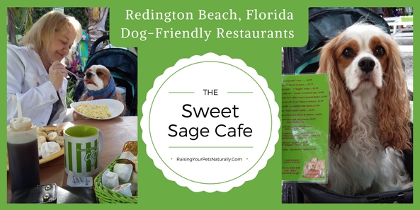 Dog-friendly vacations in Florida. Dog-friendly restaurants in North Redington Beach, Florida.  The Sweet Sage Care is an amazing dog-friendly cafe. #raisingyourpetsnaturally