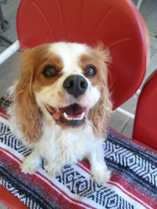 Living with a dog with a terminal disease