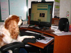 Online dog training