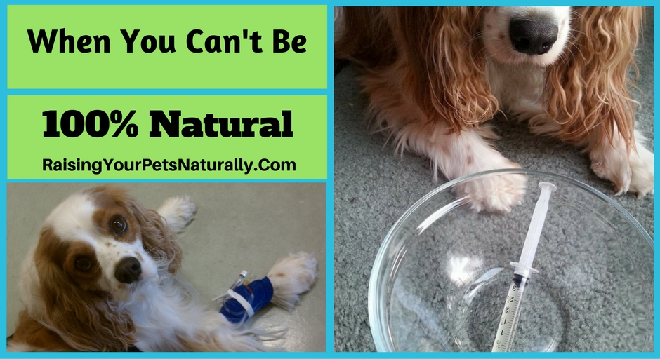 What Do You Do When Your Pet Needs Medications and You Can't be 100 Natural? Using pharmaceuticals on my pets is something I do my best to avoid. I always turn to natural therapies first, but unfortunately, that is not always possible. #raisingyourpetsnaturally