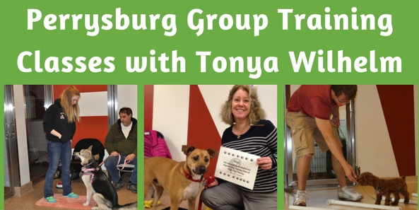 Toledo Dog Training, Perrysburg Puppy Classes, Maumee Dog Trainers and Dog Training Classes