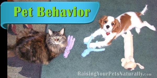 Natural and Positive Pet Behavior