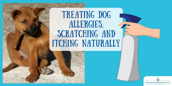 Treating Dog Allergies, Scratching and Itching Naturally Does your dog suffer from seasonal allergies?