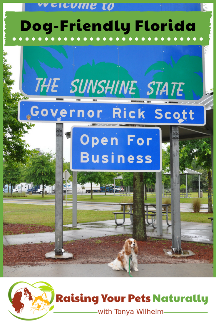 Dog-Friendly Florida Hotels, Restaurants, Stores and Activities. If you are traveling with your dog to Florida, you won't want to miss these dog-friendly destinations. #raisingyourpetsnaturally #dogfriendly #dogfriendlyflorida