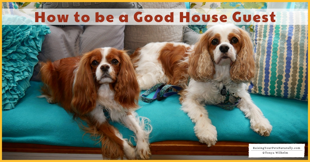 Traveling with dogs and staying with family