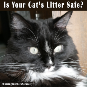 Safe Cat Litter