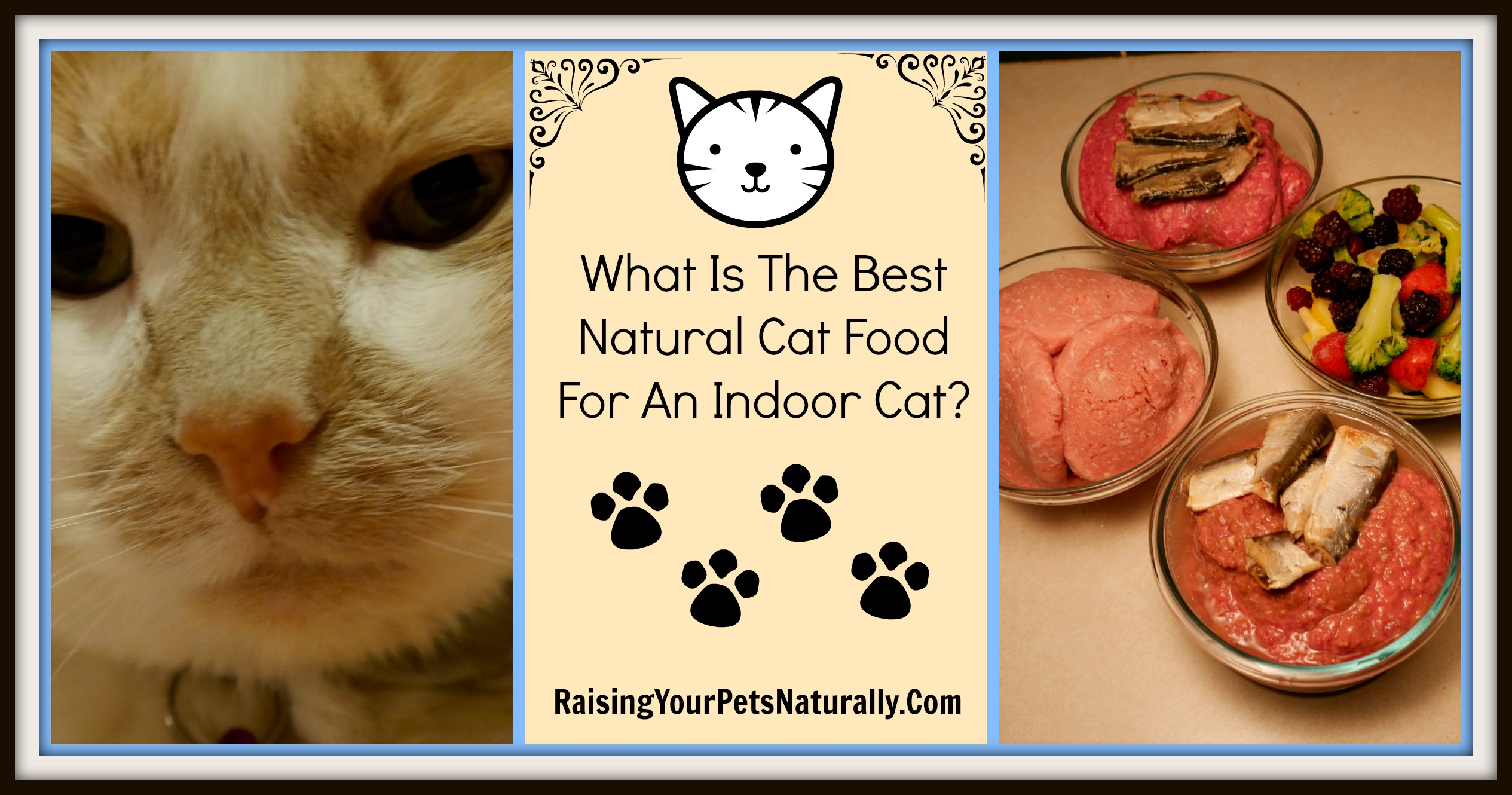 What's the best grain-free dry cat food brand? There isn't one. Dry cat food is by nature, well, dry. Cats, dogs, people… we all need a lot of moisture in our diets. Learn more. #raisingyourpetsnaturally