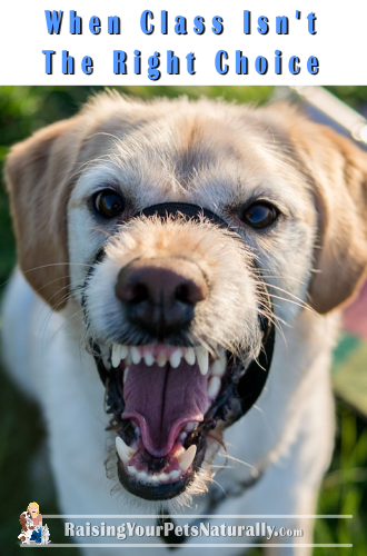 How To Stop Dog Aggression